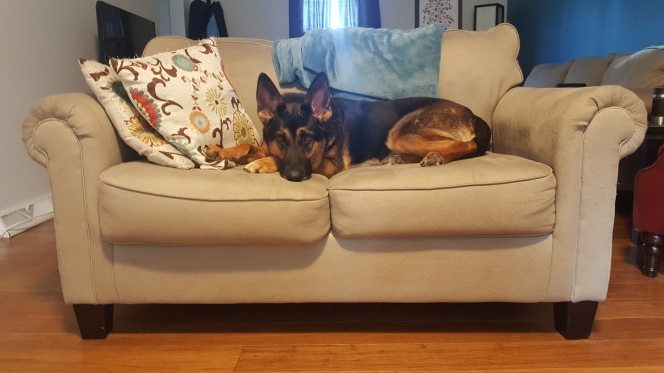 Carrie_Blog_Family Race Dog-Carrie Sorenson