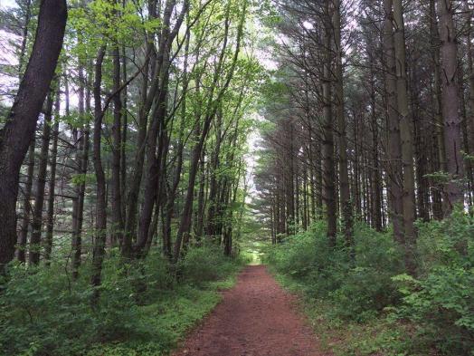 Rocky Gap State Park Trail_Brad Kroner
