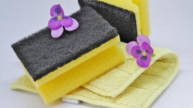 Sponges_Pixabay 3254675_1920