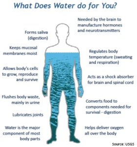 wss-property-water-in-you-body (1)